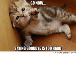 Kitten saying goodbye
